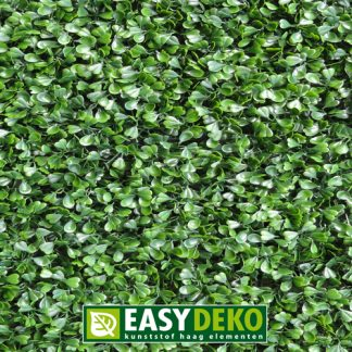 Easydeko-Buxus-sempervirens